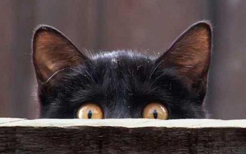 Gato-negro-espiando
