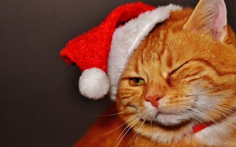 cat-1898514_1280